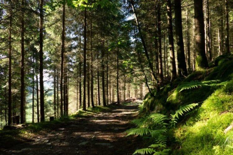 De Ardennen te voet: de Ourthe- en Lavalvallei