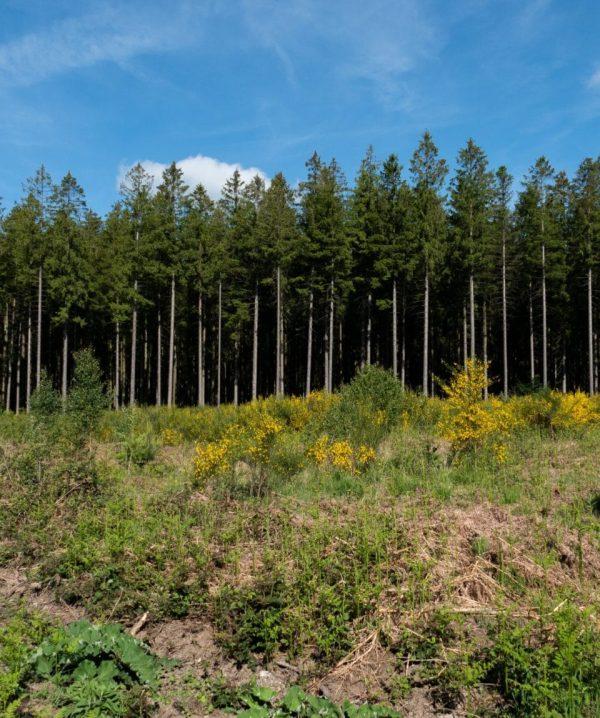 Het bos van Saint-Hubert