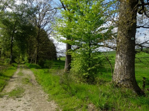 Hiking between Lesse and Lomme