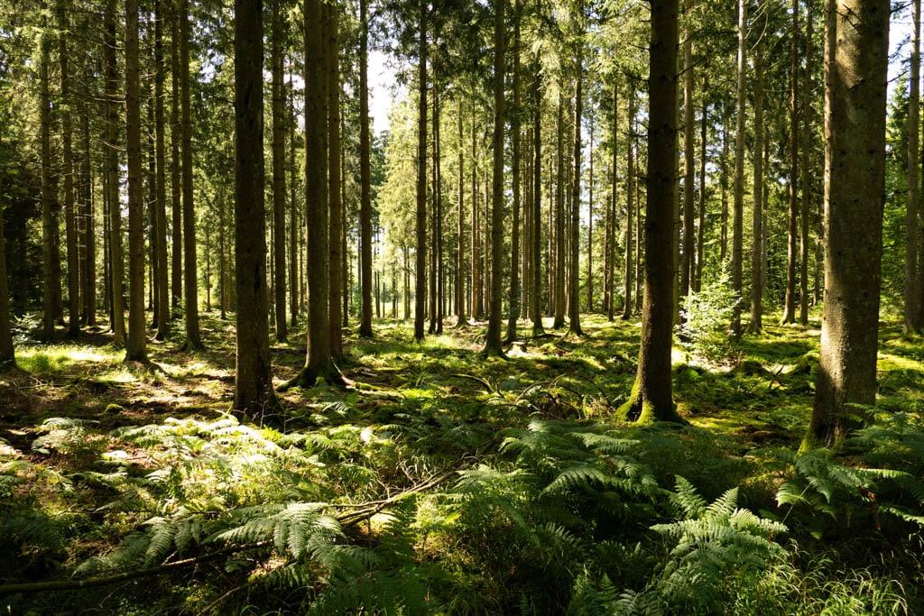 Les forêts ardennaises. Tout savoir pour préparer sa randonnée en Ardennes
