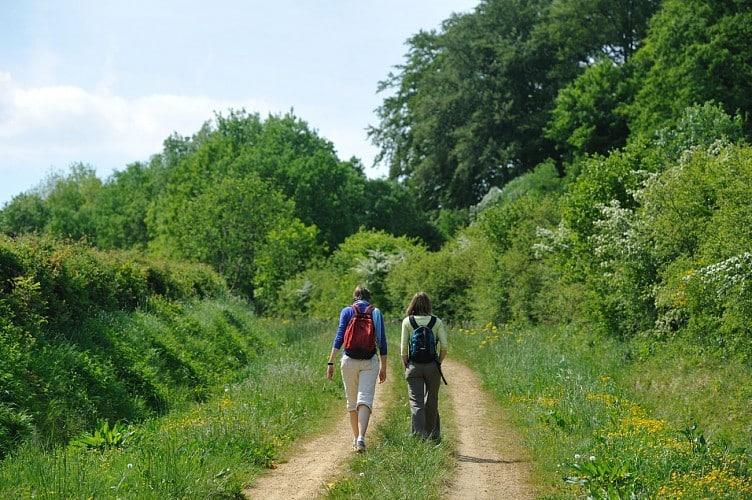 twee wandelaars op een bospad in de zomer