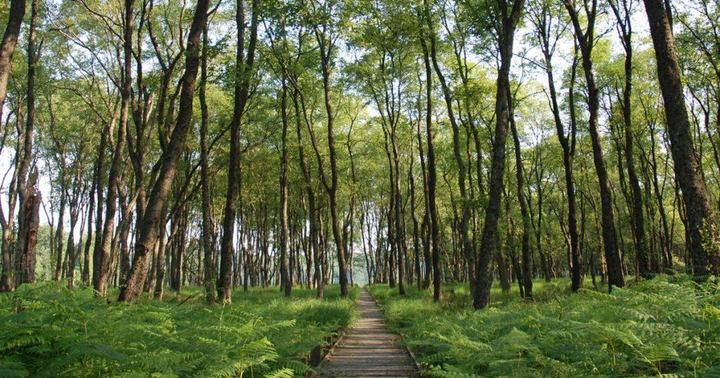 Eenzame paden, Saint-Hubert - eendaagse wandeltocht in de Ardennen